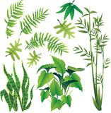 Plants. Exotic plant leaves design element  collection set Stock Photo