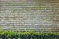 Plants and fence. Row of potted plants in front of wooden fence Royalty Free Stock Image