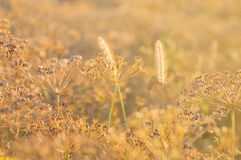 Plants field in counterlight Royalty Free Stock Photos