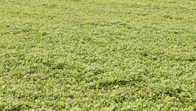 Plants on field Stock Images