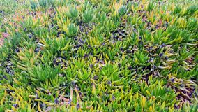 Plants. Field of plants at the side of the road, Crete Royalty Free Stock Photos