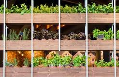 Plants in flower pot on wooden shelves Stock Image