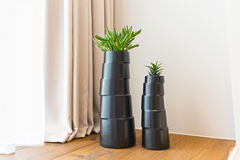 Plants in flowerpot, hotel room decoration Royalty Free Stock Photos