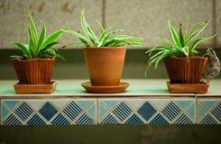 Plants in flowerpots Stock Images