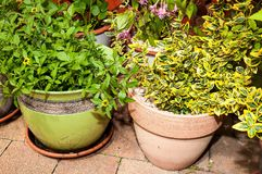 Plants in flowerpots Royalty Free Stock Photos