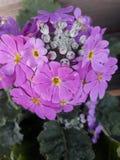 PLANTS~FLOWERS стоковое изображение rf