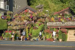 Plants and flowers decorating homes Seattle WA