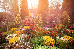 Plants and flowers on display at sunset Royalty Free Stock Photos