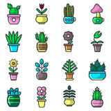 Plants and Flowers in Pots Vector Collection on White Royalty Free Stock Image