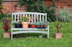 Plants and flowers in pots on a wooden garden seat or bench Stock Photos