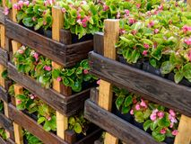Wooden crates with flowers Royalty Free Stock Photos