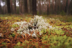 Plants in forest autumn Royalty Free Stock Photo