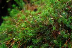 Plants. Forest in National Park Czech Switzerland, moss royalty free stock images