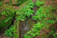 Plants. Forest in National Park Czech Switzerland, moss stock image