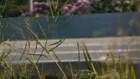 Plants on Freeway in California stock video