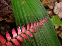 Plants in French guyana rainforest. Stock Image
