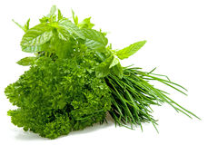 Plants of fresh herbs Royalty Free Stock Images