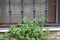 Plants in front of iron bars royalty free stock images
