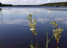 Plants in front of the lake. Some plants in front of a lake with some reed stock image