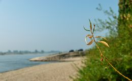 Plants in front of a riverside at a ferry landing stage stock photo