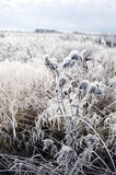 Plants with frost in frozen wintery field Stock Photo