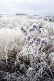 Plants with frost in frozen wintery field Stock Photo