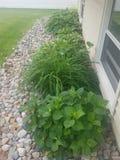 Plants galore stock images