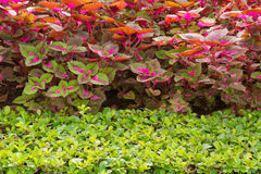 Plants in garden. Stock Photo