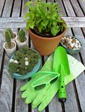 Plants and garden accessories Royalty Free Stock Photos