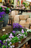 Plants in garden center Royalty Free Stock Photography