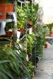 Plants in garden center royalty free stock photos