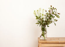 Plants from the garden in glass jar on white royalty free stock images