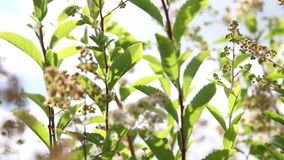 The plants in the garden. The plants in the summer garden stock footage
