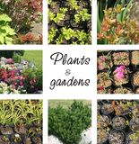 Plants and gardens Royalty Free Stock Photography