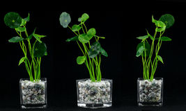 Plants and glass vase elements. Plant and glass vase element combination Royalty Free Stock Image