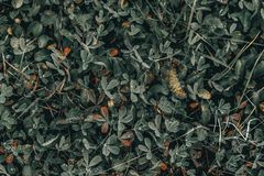 Plants and grass. In the wild forest royalty free stock image