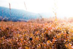 Plants and grass. In the wild forest royalty free stock photos