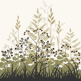 Plants and grasses background Royalty Free Stock Photos