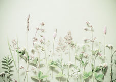 Plants on green background Royalty Free Stock Photo