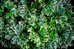 Plants Royalty Free Stock Photo