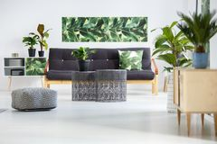 Plants in green living room. Pouf next to metal tables in front of dark sofa with green pillow in living room interior with plants on cupboards and poster on the Stock Images