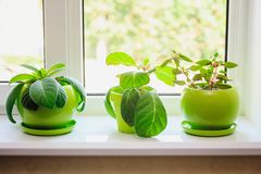 Plants in green pots on the windowsill. Plants and flowers in green pots on the windowsill, home interior stock image