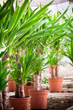 Plants in greenhouse Stock Images