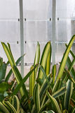 Plants in a greenhouse of  a botanic garden in the city of Valen Stock Images