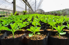 Plants in greenhouse. Young plants in the greenhouse Royalty Free Stock Photos