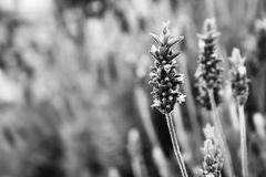 Plants in Grey Scale Illustration Royalty Free Stock Photos