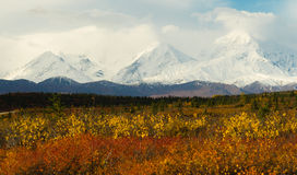 Plants Ground Cover Change Color Alaska Mountains Autumn Season Royalty Free Stock Photo