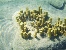 Tube sponges on sea ground Royalty Free Stock Image