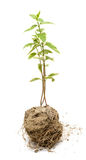 Plants grow on earth Stock Images