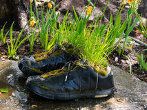 Plants grow up in a pair of black boots Stock Photos